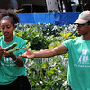 Lynn, Ma. 8-8-17. Rediet Habtegebrriel and Alix Pierre Toussaint Jr. pick cucumbers at the community garden at the Ingalls School in Lynn. This garden, stared ten years ago, yields 20,000 pounds of food per year.