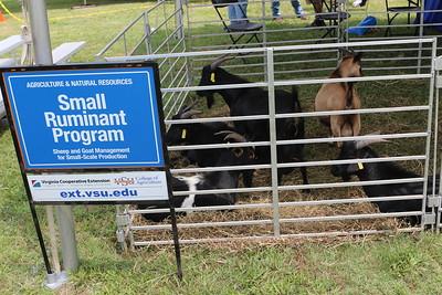 Goats from VSU's Small Ruminant Program.