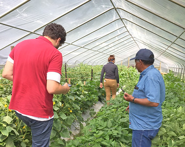 VSU Small Farm Outreach Program agents use their skills and knowledge to help Virginia's small, minority and beginning farmers build and maintain sustainable farm operations.