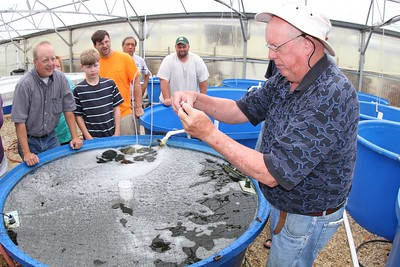 Aquaculture Extension Specialist Dr. Brian Nerrie explains how to determine the gender of tilapia.