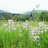 05W4N130 t:c Hay Meadow