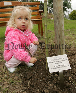 Katie Adams make the finishing touches to a tree which was palnted in Memory of their Grandfather George Hawthorne at Mullaglass P.S. on Thursday last. 07W27N8