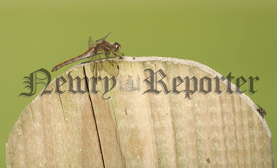 07W37N54 Dragon Fly