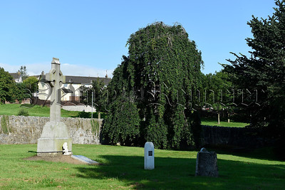 Paupers Graveyard Tree, Newry, Northern Ireland. Picture: Michael Cooper