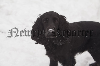 Alfie Harte enjoying the snow. R181001