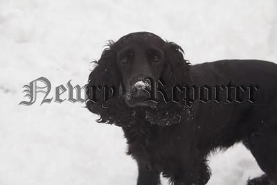 Alfie Harte enjoying the snow. R181001