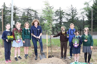 TREE PLANTING BY 7 LOCAL PRIMARY SCHOOL AT WARRENPOINT PORT