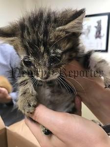 R1828167 kitten