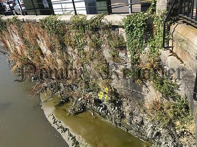 R1830304 - Weedy wall