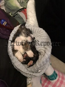 R1843115 dumped puppy