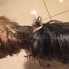 R1807115 dog attack