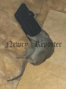 R1926143 rats .jpg