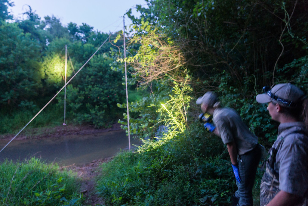 Jaclyn Beck and Rebekah Tuck use a high powered spotlight to check the creek net for a bat.
