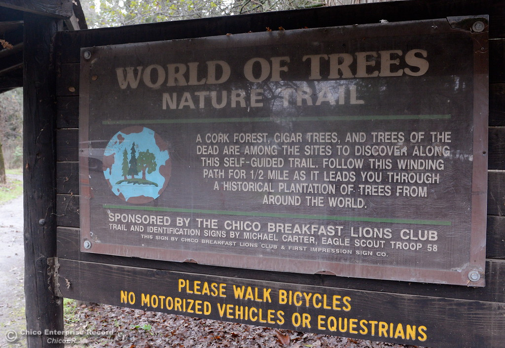 . Any time of year is a good time for a stroll through the World of Trees Nature Trail near the Chico Creek Nature Center in Bidwell Park, Chico, Calif. Wed. Jan. 10, 2018.  (Bill Husa -- Enterprise-Record)