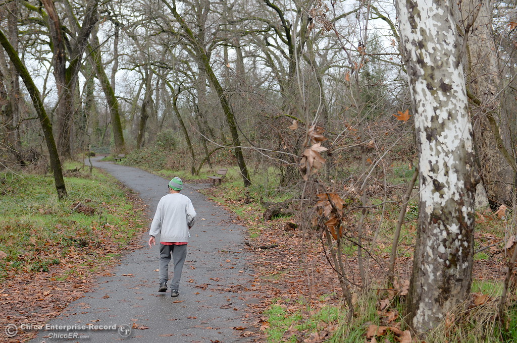 . A man strolls through a nearly leafless forest in Bidwell Park in Chico, Calif. Wed. Jan. 10, 2018.  (Bill Husa -- Enterprise-Record)