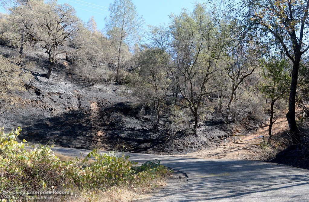 . Charred area seen along Honey Run Road after a fire that ran up from Butte Creek Canyon to lower Paradise, Calif. Tuesday. (Bill Husa -- Enterprise-Record)