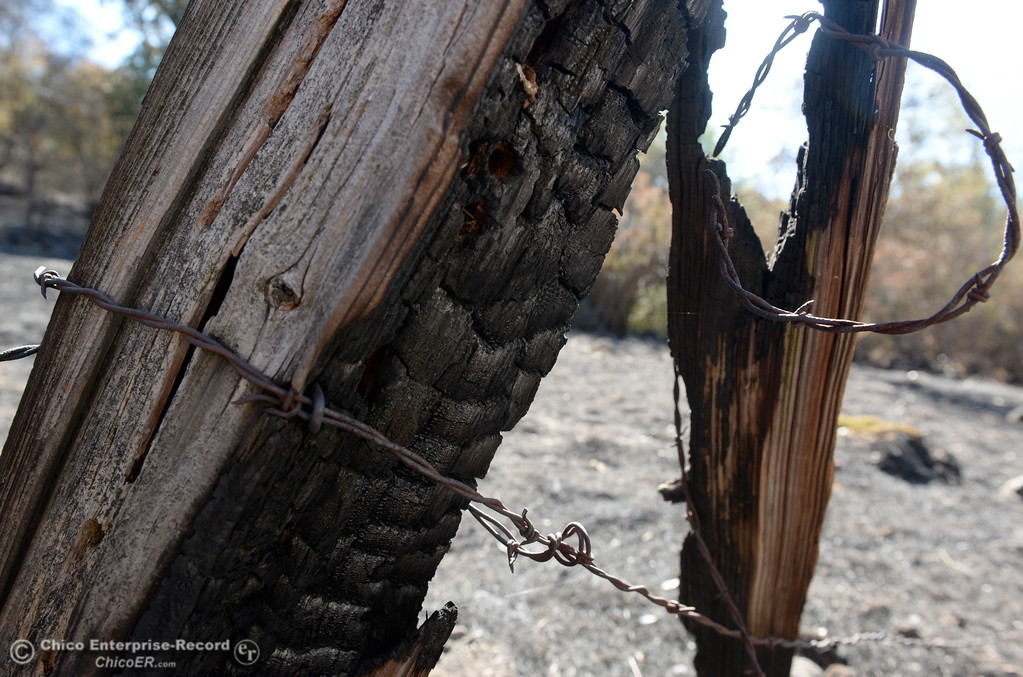 . A charred fence is seen within the fire lines of the Honey Run Fire that ran up from Butte Creek Canyon to lower Paradise, Calif. Tuesday. (Bill Husa -- Enterprise-Record)