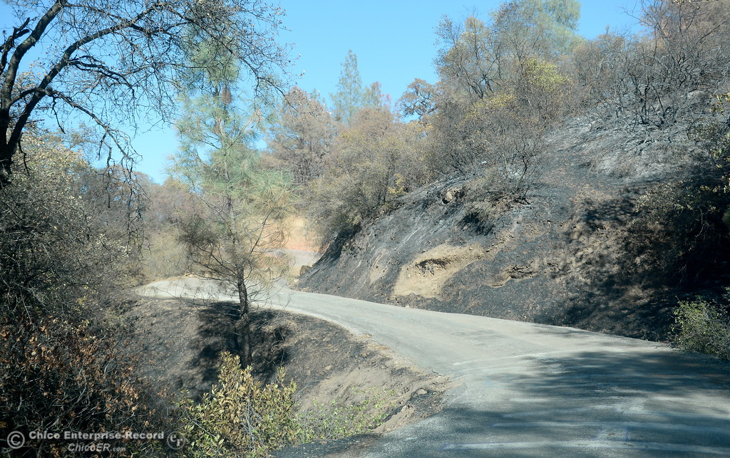 . An area along Honey Run Road where the fire crossed the road is seen Thursday within the fire lines of the Honey Run Fire that ran up from Butte Creek Canyon to lower Paradise, Calif. Tuesday. (Bill Husa -- Enterprise-Record)