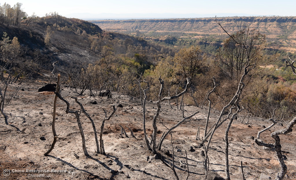 . Charred brush and debris are seen near the edge of Butte Creek Canyon below Paradise Thursday as firefighters continue to mop up and keep watch on a fire that ran up from Butte Creek Canyon to lower Paradise, Calif. Tuesday. (Bill Husa -- Enterprise-Record)
