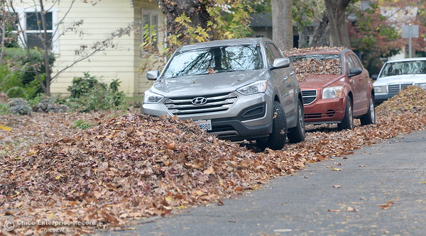 Vehicles battle for parking space among the leaf piles in Chico, Calif. Tues. Nov. 15, 2016. (Bill Husa -- Enterprise-Record)