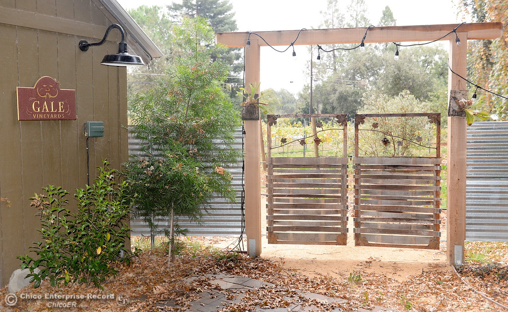 . An entryway to a vinyard is seen near the tasting room at Gale Vinyards in Durham, Calif. Fri. Nov. 3, 2017. (Bill Husa -- Enterprise-Record)