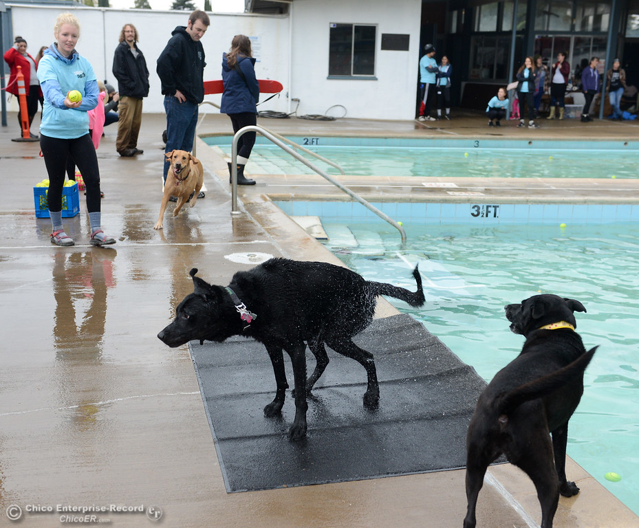 . Dogs run around Shapiro pool during the 4th annual Soggy Doggy Day Saturday November 4, 2017 in Chico, California. (Emily Bertolino -- Enterprise-Record)