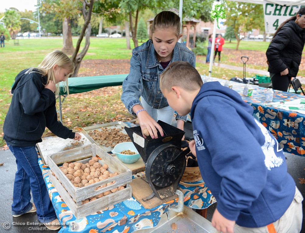 . Holly Schnieder, 8, Emery Doornbos, 13, and Adam Simpson, 9, left to right, crack and sort walnuts during the Farm City Celebration Harvest Festival Saturday November 4, 2017 at the Bidwell Mansion in Chico, California. (Emily Bertolino -- Enterprise-Record)