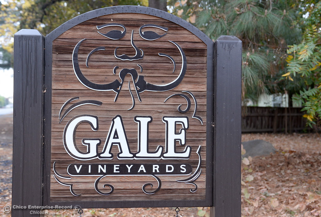 . Gale Vinyards in Durham, Calif. Fri. Nov. 3, 2017. (Bill Husa -- Enterprise-Record)