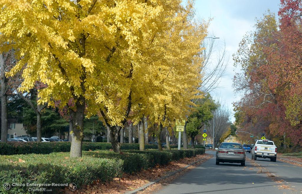 . Fall colors make for a beautiful drive down The Esplanade in Chico, Calif. Monday Nov. 27, 2017. (Bill Husa -- Enterprise-Record)