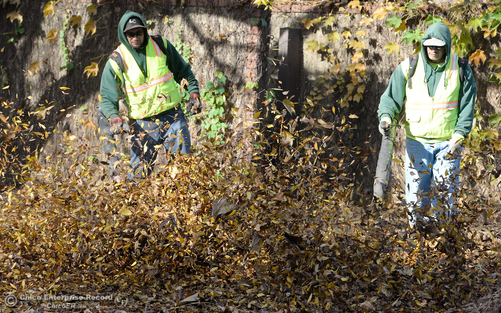 . Landscapers and City of Chico maintenance workers work around a mountain of leafs, sometimes bigger than a car along Henshaw Ave. in Chico, Calif. Thurs. Nov. 30, 2017. (Bill Husa -- Enterprise-Record)