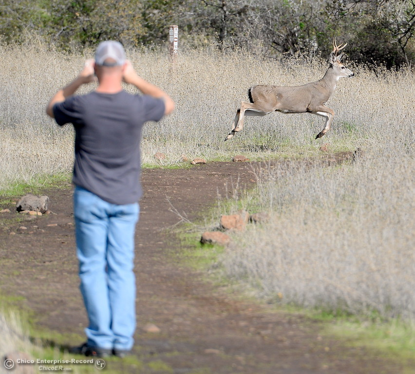. John Klepps of Chico gets a photo and video clip of a buck running through Upper Bidwell Park in Chico, Calif. Monday Nov. 27, 2017. (Bill Husa -- Enterprise-Record)