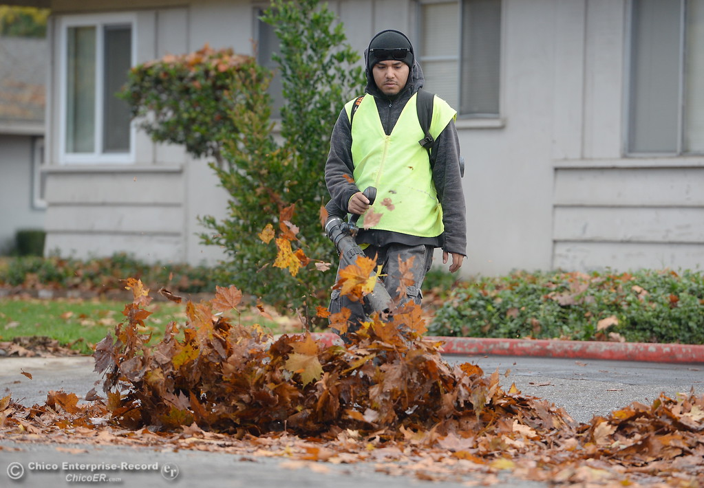 . PLM Landscape Professional Michael Aguinaga gets after a pile of leafs along Rio Lindo Ave. in Chico, Calif. Monday Nov. 27, 2017. (Bill Husa -- Enterprise-Record)