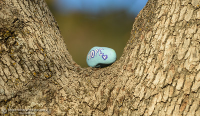 A sweetly painted rock is placed on a tree in Upper Bidwell Park, Thursday, February 8, 2018, in Chico, California. (Carin Dorghalli -- Enterprise-Record)