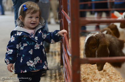 Hadleigh Gladman stands by a sheep pen during Chico State Farm's Sheep and Goats Education Day, Saturday, February 10, 2018, in Chico, California. (Carin Dorghalli -- Enterprise-Record)