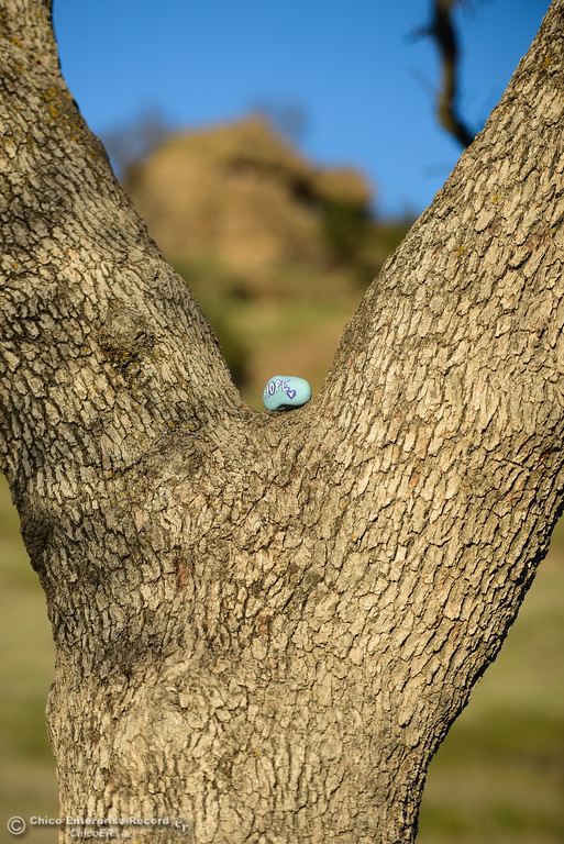 . A sweetly painted rock is placed on a tree in Upper Bidwell Park, Thursday, February 8, 2018, in Chico, California. (Carin Dorghalli -- Enterprise-Record)