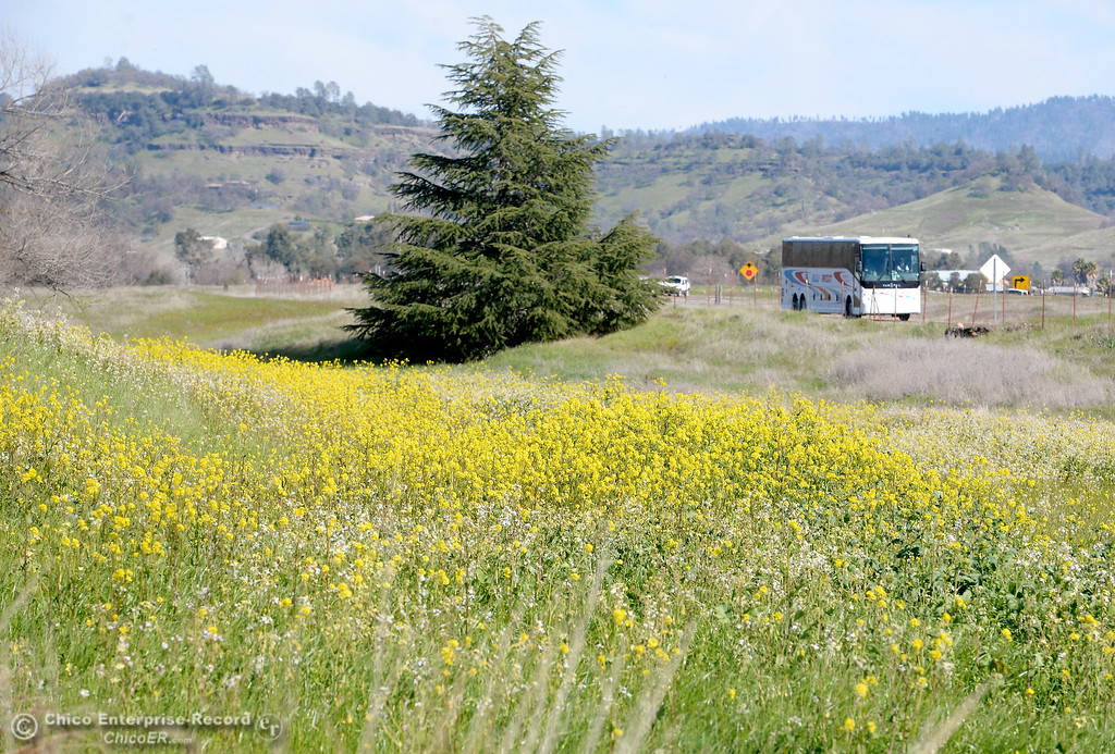 . A tour bus drives along Durham Pentz Road past a field of wildflowers near the Butte College campus Friday Feb. 16, 2018. (Bill Husa -- Enterprise-Record)
