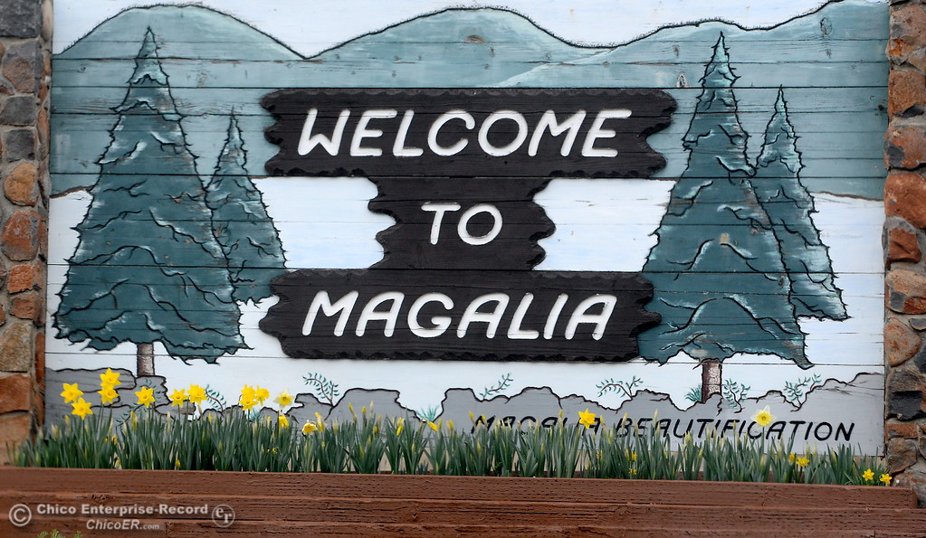 . Drivers enjoy the blooming daffodils near the sign along Skyway in Magalia as they wait for an accident to clear near the Magalia Reservoir Feb. 22, 2018.  (Bill Husa -- Enterprise-Record)