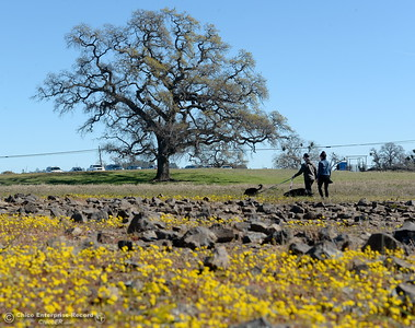 Hikers Brenon Odell and Miranda Weir of Chico take dogs Bronson and Ava out for a stroll through the wildflowers that are just beginning to bloom on Table Mountain Monday March 5, 2018. Hikers 16-years or older are now required to have a Lands Pass or valid hunting or fishing license. (Bill Husa -- Enterprise-Record)
