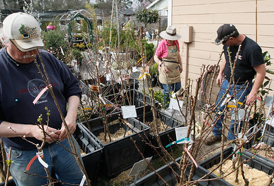 Fruit trees March 13, 2017 at TJ's Nursery in Chico, California. (Emily Bertolino -- Enterprise-Record)