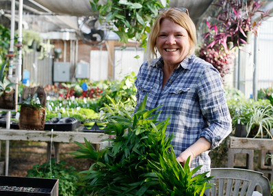 Sally Greenwood transplants plats in the greenhouse March 8, 2017 at the Plant Barn & Gift Shop in Chico, California. (Emily Bertolino -- Enterprise-Record)