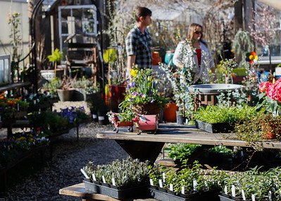 At the entrance of the Plant Barn & Gift Shop where the end of winter wears off as the start of spring approaches March 8, 2017 in Chico, California. (Emily Bertolino -- Enterprise-Record)