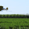 A crop duster flys over crops along Highway 39 in Glenn County, Tuesday, March 15, 2016. (Heather Hacking-Enterprise-Record).