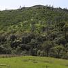 Big Chico Creek Ecological Reserve, April 13, 2018, in Chico, California. (Carin Dorghalli -- Enterprise-Record)