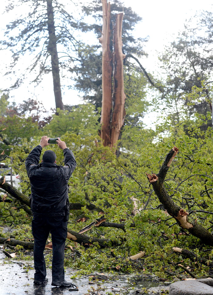 University Police Officer Lance Conlan snaps a photo of a tree near Bidwell Mansion that was struck by lighting splattering over 15 vehicles with pieces of wood during a thunderstorm in Chico, Calif. Thurs. April 13, 2017. No injuries were reported. (Bill Husa -- Enterprise-Record)