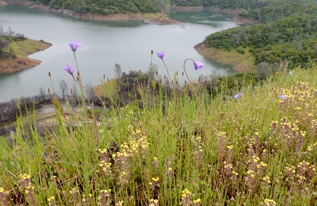 . Wildflowers and Lake Oroville are seen above the Nelson Bar Day use area from Silvera Ct. below Paradise, Calif. Tuesday April 11, 2017. (Bill Husa -- Enterprise-Record)