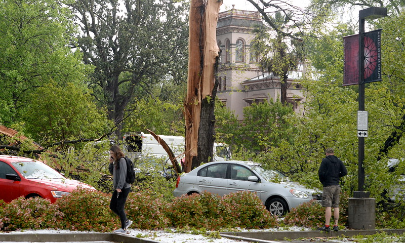 A tree near Bidwell Mansion was struck by lighting splattering over 15 vehicles with pieces of wood during a thunderstorm in Chico, Calif. Thurs. April 13, 2017. (Bill Husa -- Enterprise-Record)