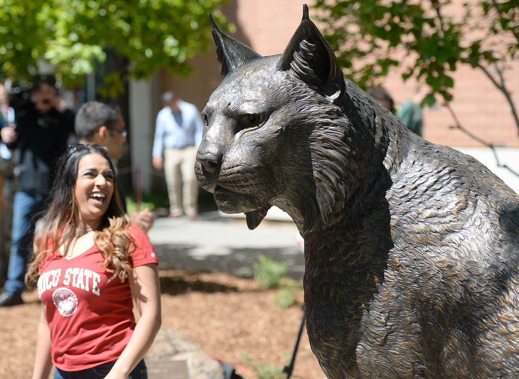 . Hundreds of CSUC students and faculty gather for the unvieling of the new Wildcat Statue by Washington Artist Matthew Gray Palmer Thursday. The statue was achieved through a collaborative effort between The Associated Students, Chico State Alumni Association and Wildcat Athletics. (Bill Husa -- Enterprise-Record)