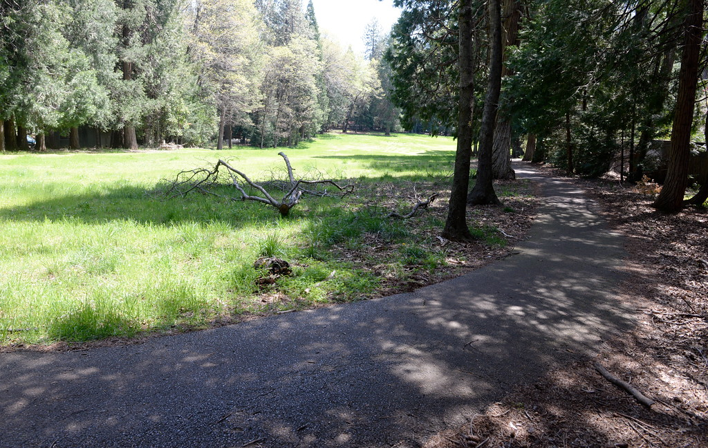 . Nature is slowly but surely reclaiming the old Paradise Pines Golf Course in Magalia, Calif. Friday April 13, 2018. The nine hole course which operated for 44 years closed permanently Nov. 1, 2014. (Bill Husa -- Enterprise-Record)