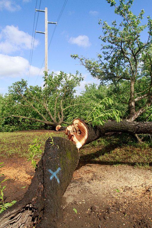 . PG&E cut 70 trees Friday, April 27, 2018, under transmission lines on Mendonca Orchards property in Chico, California. (Dan Reidel -- Enterprise-Record)