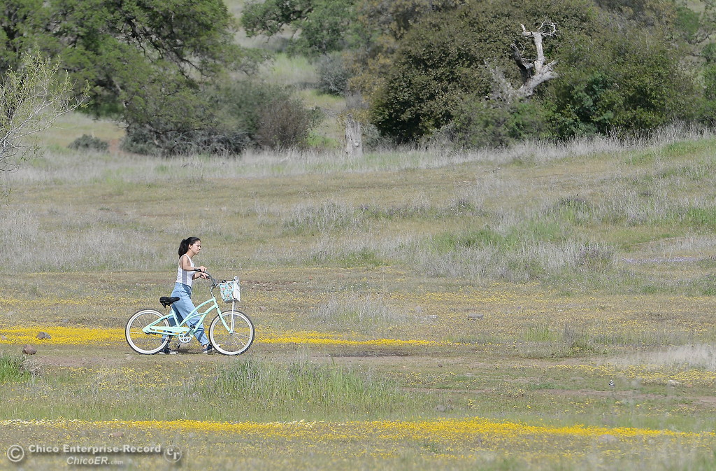 . A woman walks her bicycle through yellow wildflowers in Upper Bidwell Park in Chico, Calif. Tues. April 3, 2018.  (Bill Husa -- Enterprise-Record)
